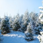 Agricultural Fencing Tips: How To Protect Christmas Tree Farms From Deer Damage